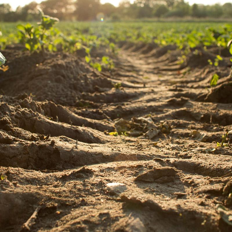 Erdboden auf einem Feld